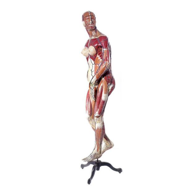 Full Size Dr. Auzoux Female Anatomical Model