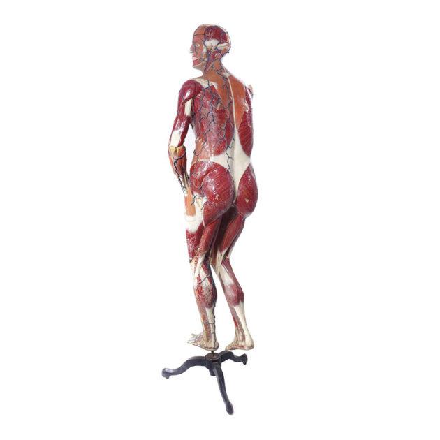 Full Size Dr. Auzoux Female Anatomical Model